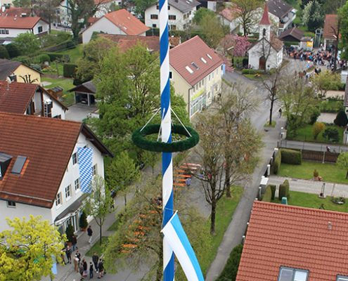 30 Meter hoch: Der neue Maibaum wird vom Hoaschdenger Kegelclub mitten im Herzen von Heimstetten aufgestellt.