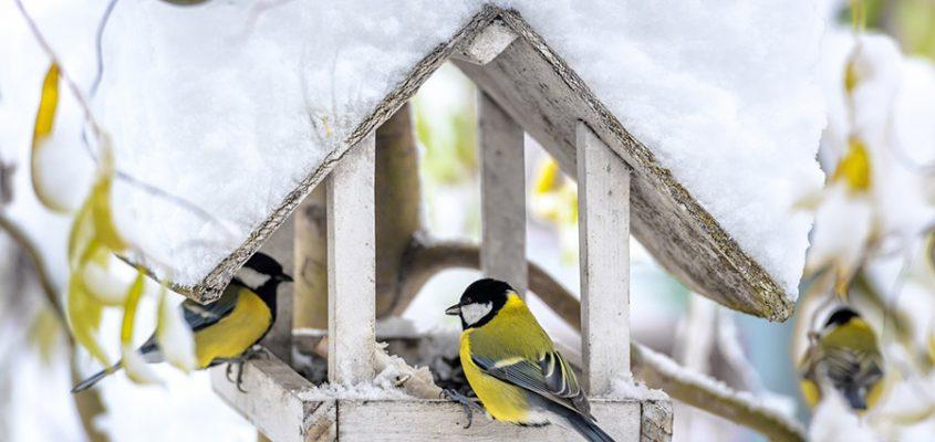 Füttern ist nur angebracht bei geschlossener Schneedecke und Dauerfrost. Foto: ivan kmit - Fotolia.com