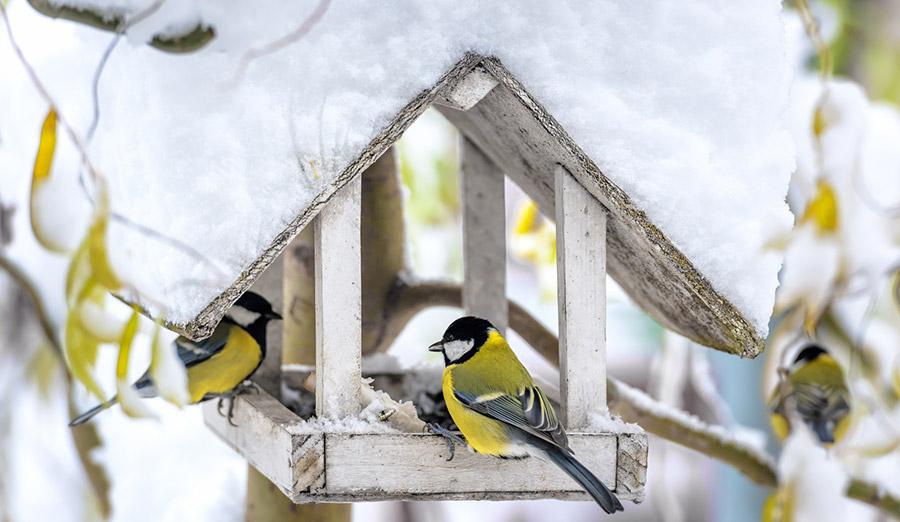 vogelf tterung im winter gemeinde kirchheim b m nchen. Black Bedroom Furniture Sets. Home Design Ideas