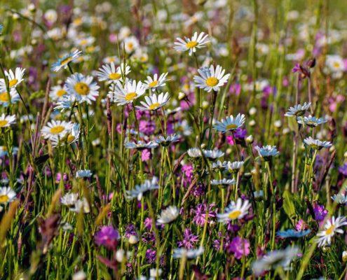 Foto einer Blumenwiese. Kirchheims große grüne Chance: Die Landesgartenschau soll in die Gemeinde kommen.