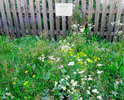 Foto einer Blühwiese