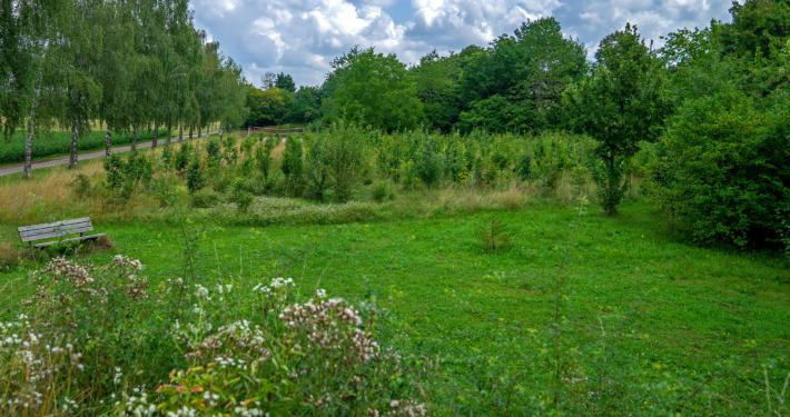 Eichen, Hainbuchen, Sommerlinde, Weißdorn, Hasel: Die Bäume
