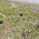 Pflanzendiebstahl auf öffentlichen Flächen