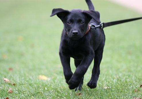 Infos zur Haltung von Hunden