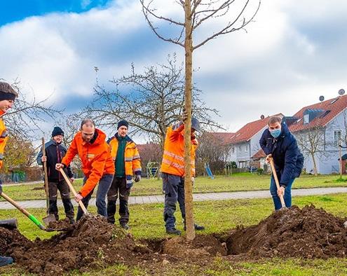 Baum des Jahres 2020: Erster Bürgermeister Maximilian Böltl half tatkräftig mit, als das Team der Bauhofgärtnerei und der Leiter des Umweltamtes, Robert Maier, eine Robinie in die Erde setzten.