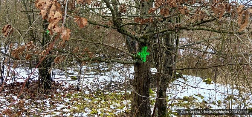 Foto: grün markierter Baum