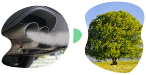 Foto: CO2-Kompensation in Kirchheim