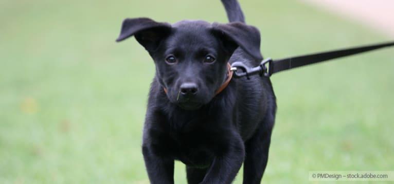 Foto: Hund an einer Hundeleine
